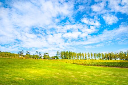 Meadow with nice  blue sky and vineyard, Yarra Valley, tarrawarra, Melbourne, Australia Фото со стока - 134894527