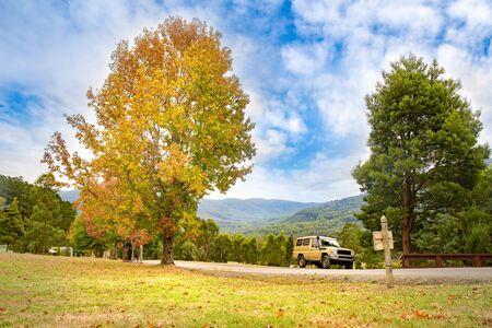 Meadown and tree view with car on street Zdjęcie Seryjne