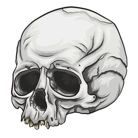 eye sockets: Skull Vector Illustration
