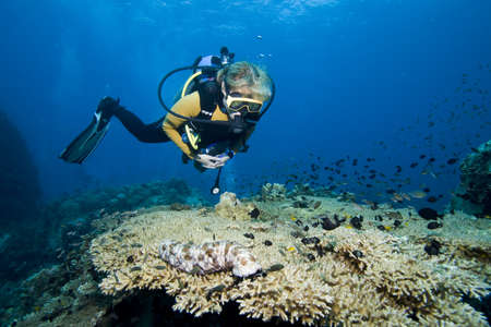picada: Buzo femenina flotando sobre coral y peces