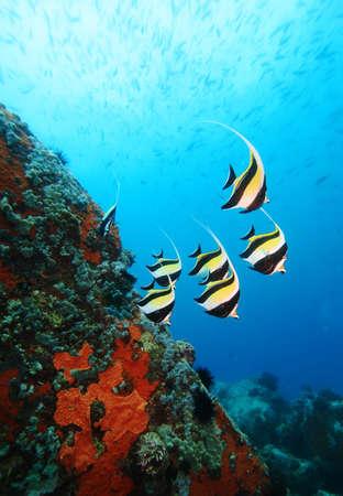 SzkoÅ'a Maurów Idols na Oceanie Indyjskim Zdjęcie Seryjne