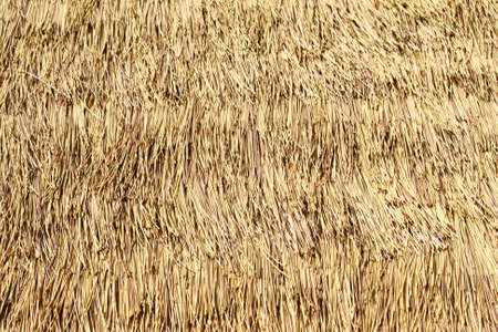 thatched: Background of thatched roof