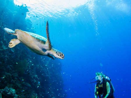 Scuba diver meets a green sea turtle photo
