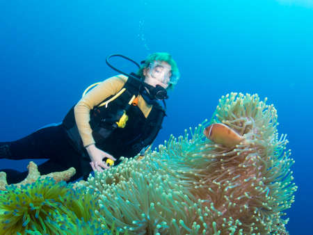 pink anemonefish: Female Diver looking at a Pink Anemone fish or Clown fish at Bunaken, Indonesia