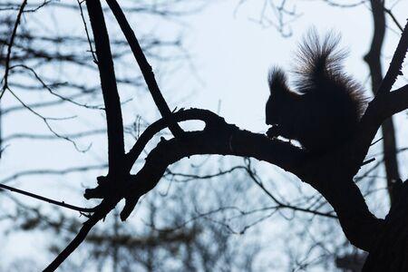 arbour: squirrel on tree
