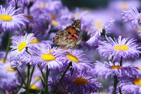 purple butterfly perched on a flower Stock Photo - 16298232