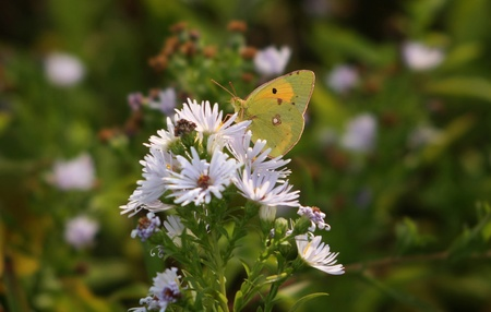 butterfly; insect; animal; beautiful; winged photo