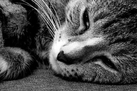 Cute little cat Imagens