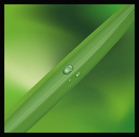 Close-ups water drops on green plant Vector