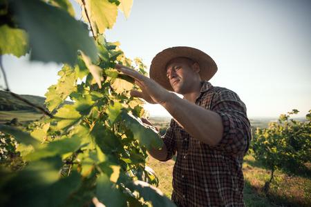 agricultor: Granjero con el sombrero de trabajar en la viña