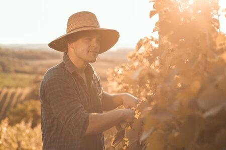uvas: Granjero con trabajo sombrero y posando en su vi�a