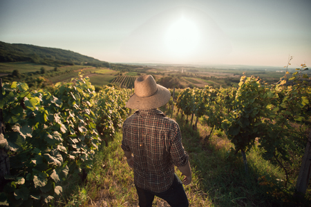 only one mid adult male: Satisfied farmer with hat standing in his vineyard