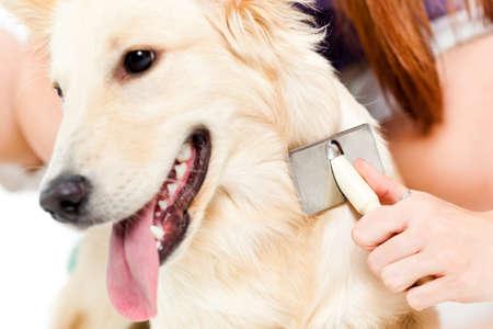 Frau, die ihr Hund Standard-Bild - 40655195