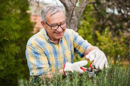 彼の庭で年配の男性。彼は剪定植物です。