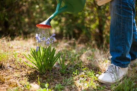 Senior man in his garden. He is watering flowers. Stock Photo