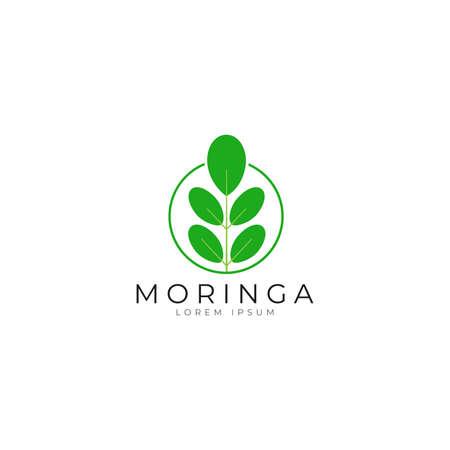 Moringa leaf icon logo vector design template