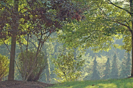 Trees of various shades of green with sun filtering throuh.