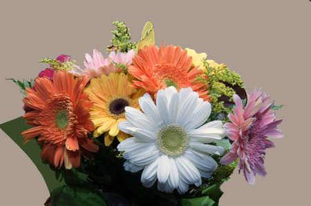 various colors of chrysanthemums Archivio Fotografico