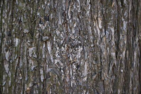 Wooden bark
