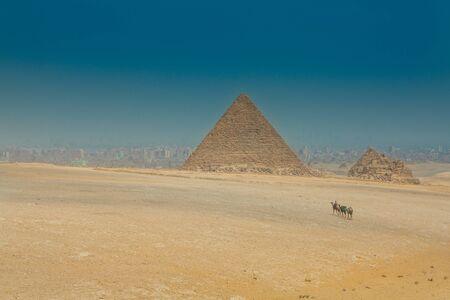 camels caravan on egyptian pyramid background Stock Photo