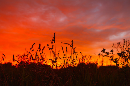 Colorful firely sunset in field