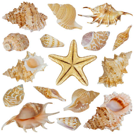 Seashell collection isolated on white background photo
