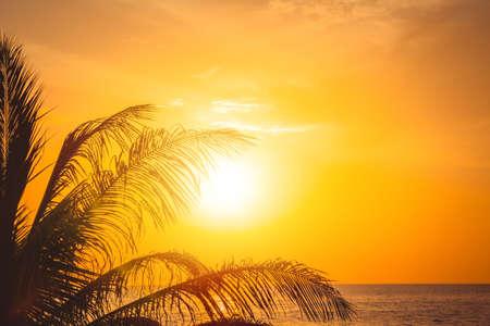 Palm tree at beautiful sunset. Phuket, Thailand. 版權商用圖片