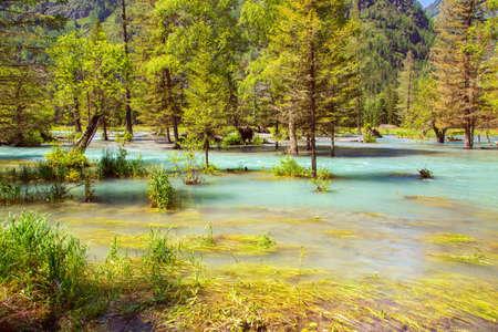 Flooded forest wild river. Landscape view 版權商用圖片