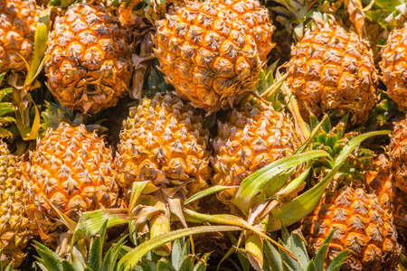 Pineapple background. A lot of tropical ananas fruit
