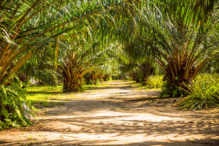 The alley with palm trees, Thailand, Phi-Phi