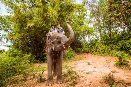 Tourists  are riding on elephants through the jungle in Thailand