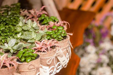 Des arbres dans des sacs comme des faveurs de mariage Banque d'images - 88022361