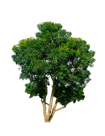 The trees in the white isolated background can be used in various applications about the design.