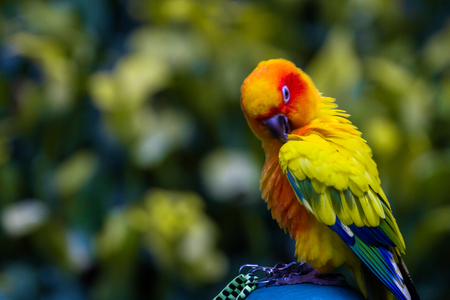 Parrots are birds with long life and easy to include some type of nests is the music and have the intelligence.