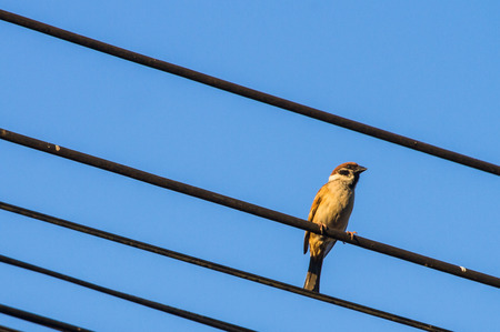 Sparrow Island birds on wires with the background of a sky.