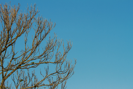 In summer, the trees are deciduous, but left branches dry, which the sky as the background.