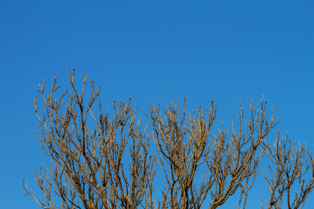In summer, the trees are deciduous. But dry branches The sky in the background