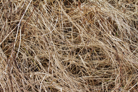 Dry dead grass Which is used as background