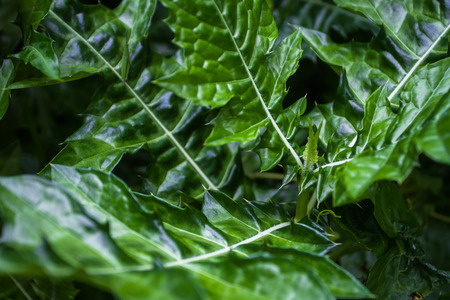 Acanthus ebracteatus Vahl can import medicinal properties used in the treatment of several types of very notable it is to bring cures for almost any type of skin disease.