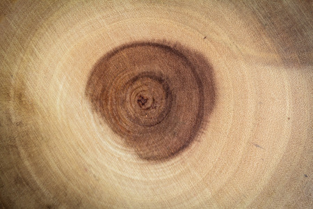 The circle of wood pattern is formed by nature and indicative of the age of the tree. Stok Fotoğraf