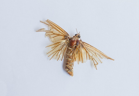 The moth dies, then put on white background