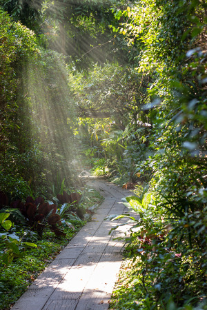 The path in the garden has stone slabs made into a pathway in the lawn.