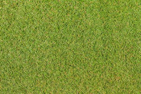 Pretty green artificial grass is the background.