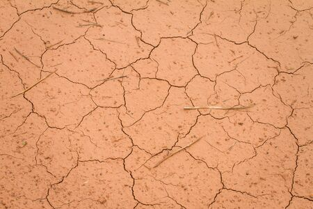 The soil is dry until shattered, used as a background.