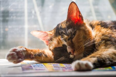 Homeless cat sleeps in front of window. Zdjęcie Seryjne