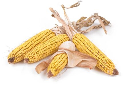Corn in the pottery isolated Stock Photo