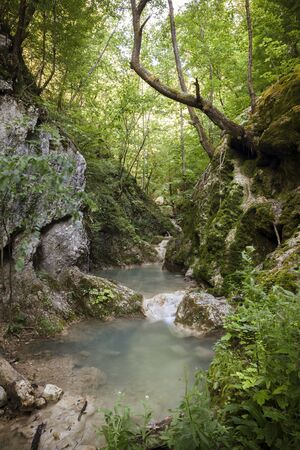 flowing water: forest canyon with a small stream, beauty of nature Stock Photo