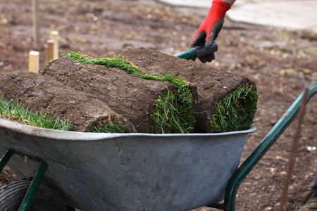 turf pile: Rolls for installing new lawn and worker pushing wheelbarrow with rolls