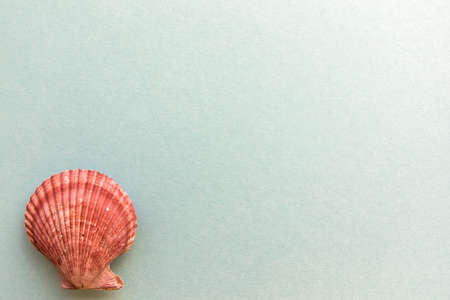 Different shells isolated on a blue background Stock Photo
