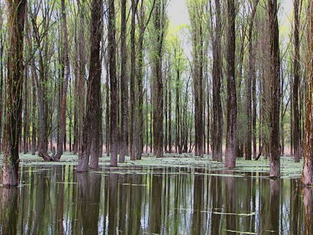 forest and river photo